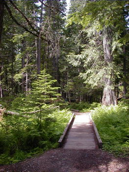 Ross Creek Giant Cedars Natural Area Libby Montana